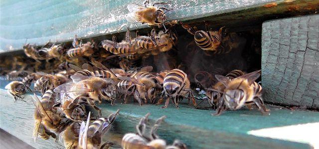Bienen retten in der Stadt