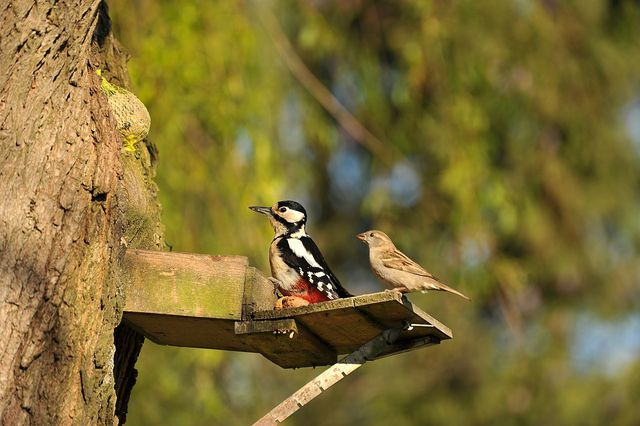 Vögel haben unterschiedliche Ansprüche an ihren Nistplatz.