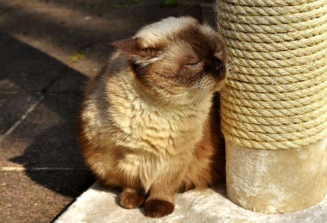 Glückliche Katze mit neuem Kratzbaum.