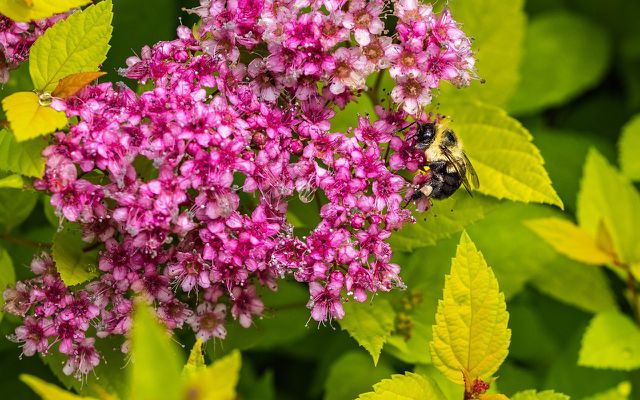 flowering shrub full sun