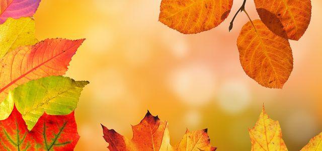 Herbstdeko Basteln 3 Ideen Mit Naturmaterialien Utopiade