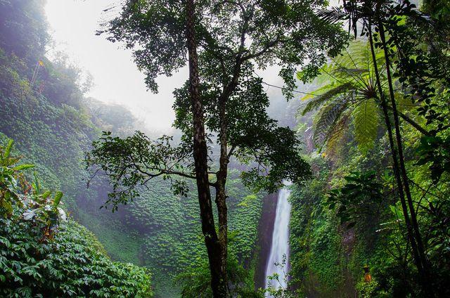 Ecosia hilft, den Regenwald zu erhalten