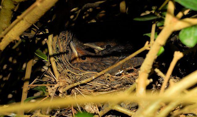 Ein gut verstecktes Vogelnest