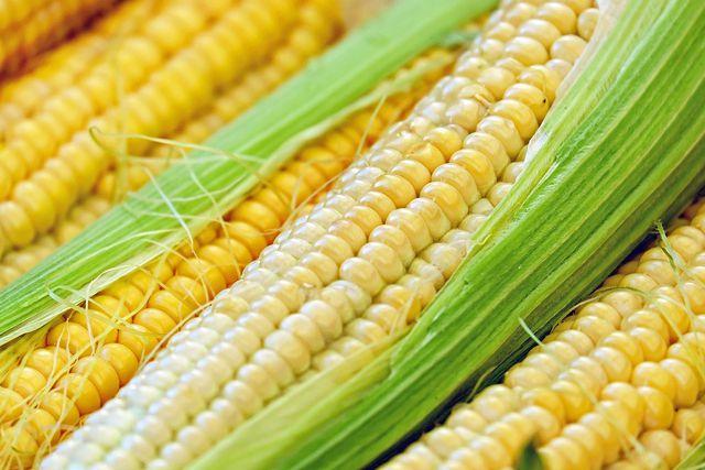 Frischer Mais hat Saison von Juli bis Oktober.