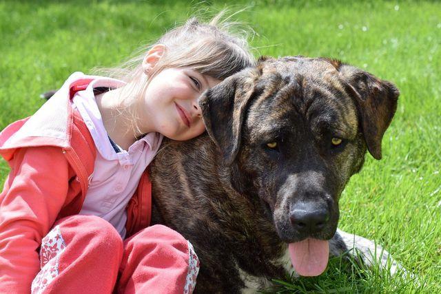 Kinder und Hunde gehen oft eine enge Beziehung ein.