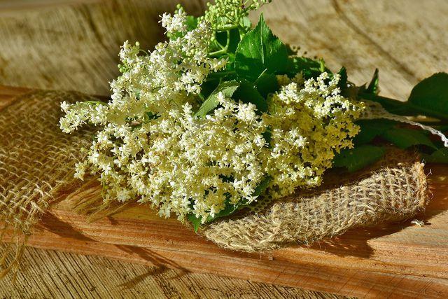 Zunächst musst du für den Holunderblütensekt die gesammelten Blüten reinigen.