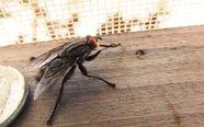 Fliegen vertreiben