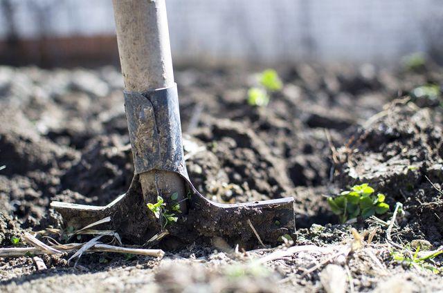 Wenn Pflanzen nicht richtig gedeihen, kann ein Nährstoffmangel Schuld sein.