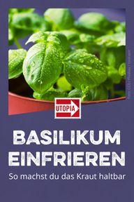 Basilikum einfrieren: So machst du das Kraut haltbar