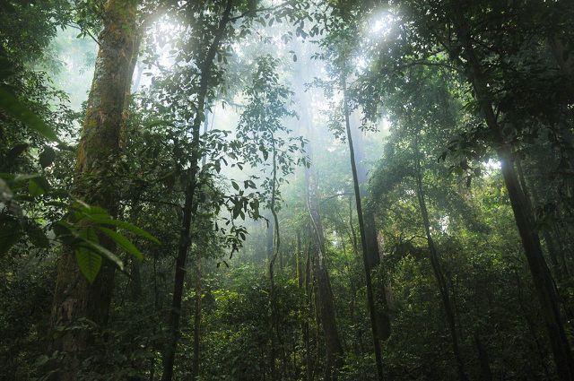 Bis die Tropenholz-Bäume das Licht erreichen, wachsen sie astrein.