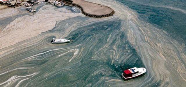 Experte zu Marmarameer: Schleim richtet irreversible Schäden an.