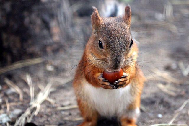 Beschädigte Haselnüsse kannst du für die Tierwelt zurücklassen.