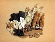 Die Wurzeln der Engelwurzpflanze haben viele gesundheitsfördernde Eigenschaften