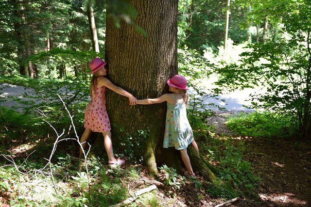 Einen Baum zu umarmen gilt mittlerweile auch in der westlichen Welt als eine bewährte Anti-Stress-Methode.