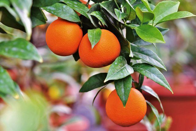 Mit Crowdfarming kannst du deinen eigenen Orangenbaum adoptieren
