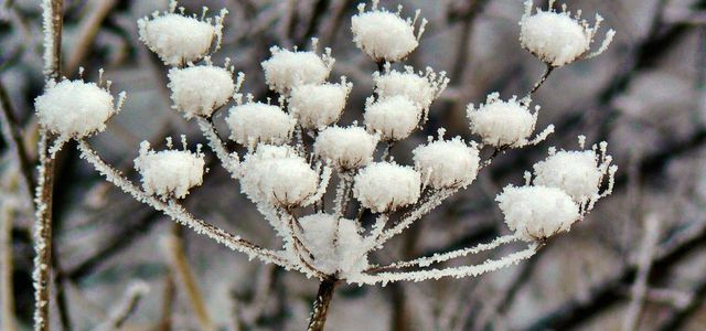 winterharte stauden
