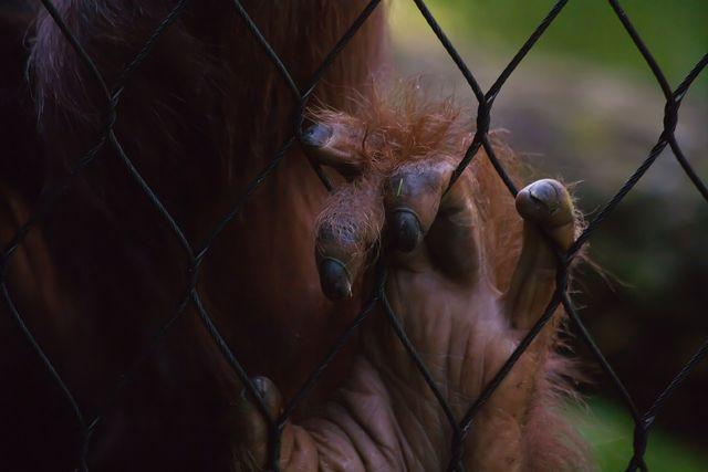 Oft werden Affen für Tierversuche benutzt.