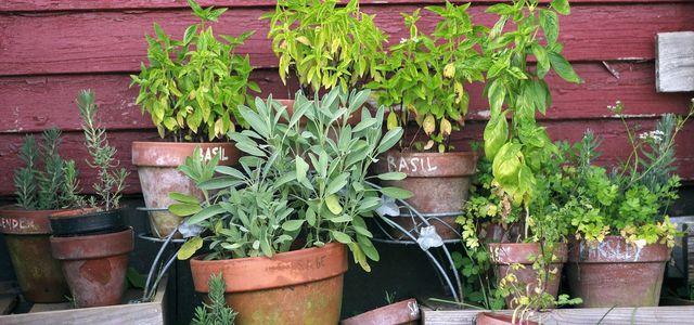 Kräuter Anpflanzen Mit Diesen Tipps Gelingt Es Ganz Leicht Utopiade