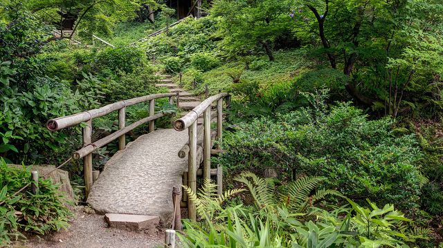 Bambus anpflanzen: darauf solltest du achten - Utopia.de
