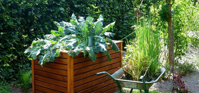 Hochbeet Bepflanzen Diese 8 Gemüsesorten Eignen Sich Besonders
