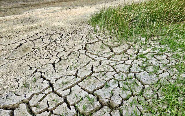 CO2 mag Pflanzen nützen, der Klimawandel tut es nicht