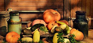 The ultimate guide on how to plant pumpkins