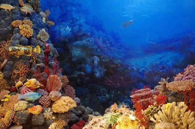 Octocrylen kann sich in Korallen ablagern.