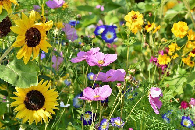 Im Frühling ist es an der Zeit, neue Blumenzwiebeln zu setzen.