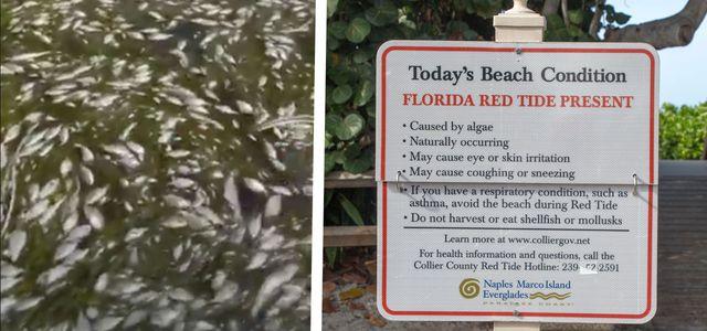 Vor Florida: Rote Algen sorgen für Millionen tote Fische.