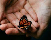 UN Artensterben Schmetterling