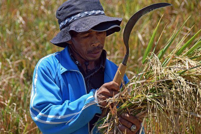 Vertreibung der Kleinbauern durch Land Grabbing