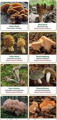 "App zum Pilze Bestimmen: ""Shroomify Mushroom Identification""."