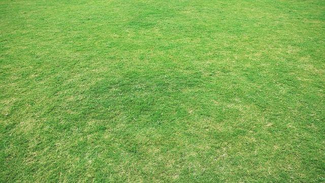 Nur den Rasen kalken, wenn es auch notwendig ist.