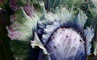 Rotkohl enthält viele Vitamine, Mineralstoffe und Antioxidantien.