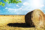 Die Regionalwert AG investiert vor allem in nachhaltige Landwirtschaft.