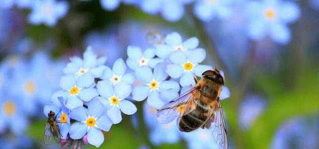 how to help bees