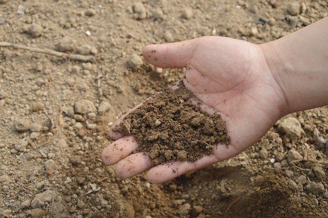 Welche Bodenart vorliegt, kannst du leicht selbst untersuchen.
