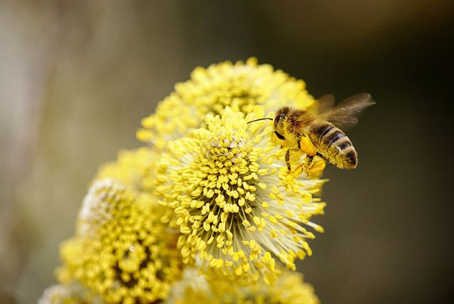 Allergiker sollten beim Osterstrauß die richtigen Pflanzen wählen