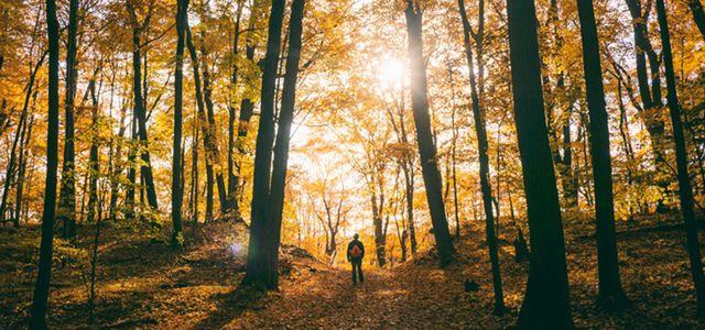 PRIMAKLIMA; Wald; Umweltschutz;Sponsored Article