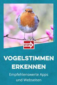 vogelstimmen kostenlos herunterladen