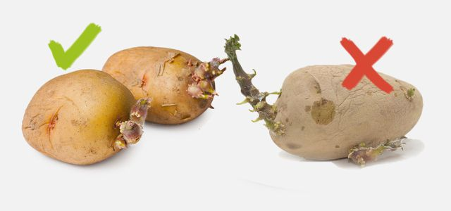 Sind Kartoffeln Giftig