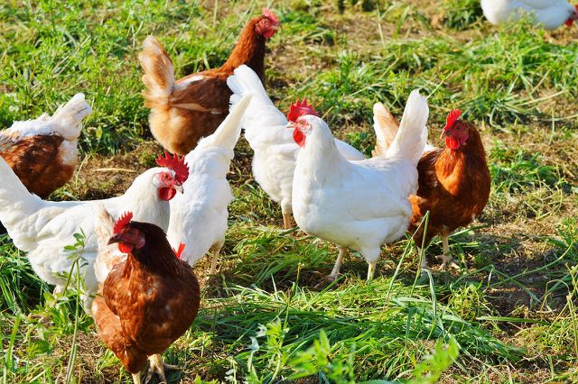 Kaufe immer Bio-Eier um eine artgerechte Haltung zu garantieren.