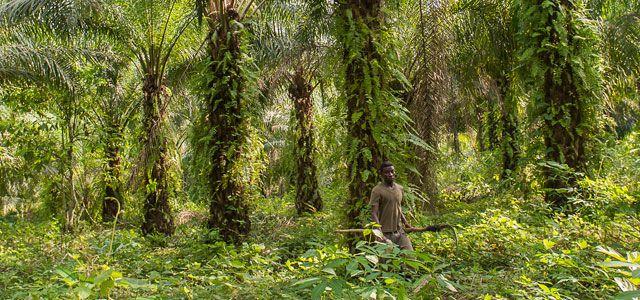 Rapunzel - nachhaltiger Anbau von Palmöl