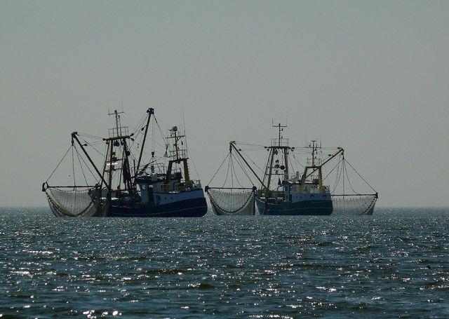 Überfischung bedroht die Biodiversität.