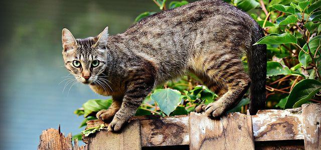 Katzenurin Entfernen Hausmittel Gegen Geruch Und Flecken Utopia De