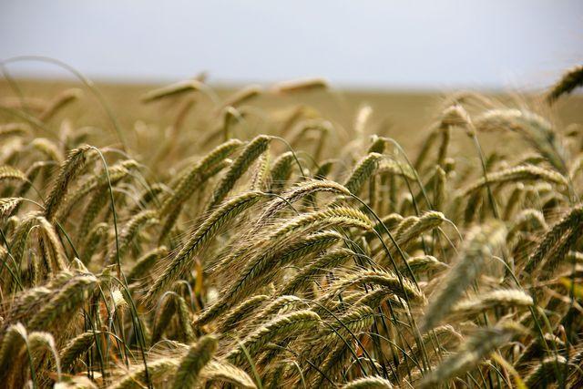 Der Verzicht auf schädliche Pestizide in der ökologschen Landwirtschaft trägt nicht nur zu Klimaschutz und Artenerhalt, sondern auch unserer eigenen Gesundheit bei.