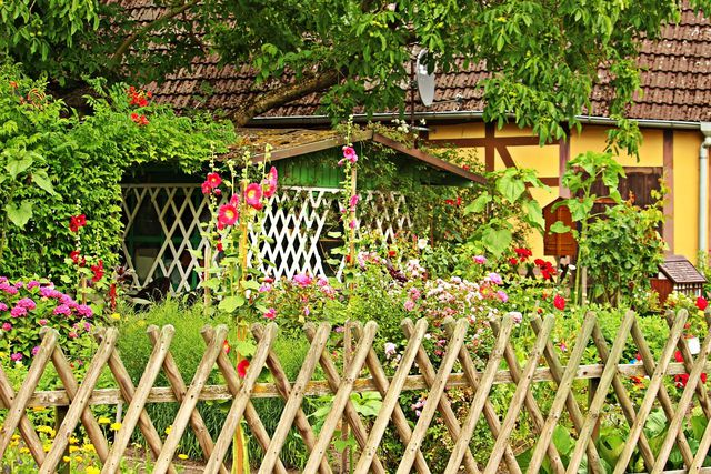 Stockrosen passen gut in einen Bauerngarten.