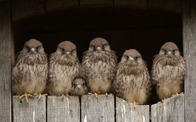 REWE Heimische Vögel