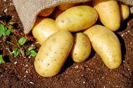 Rohe Kartoffeln können gegen Sodbrennen helfen