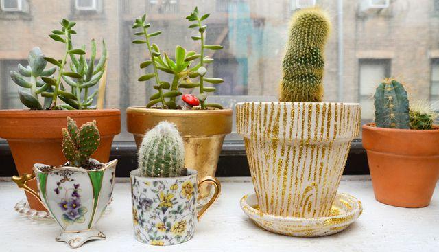 Zimmerpflanzen: Kakteen, Sukkulenten